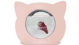 Pink cat fish bowl